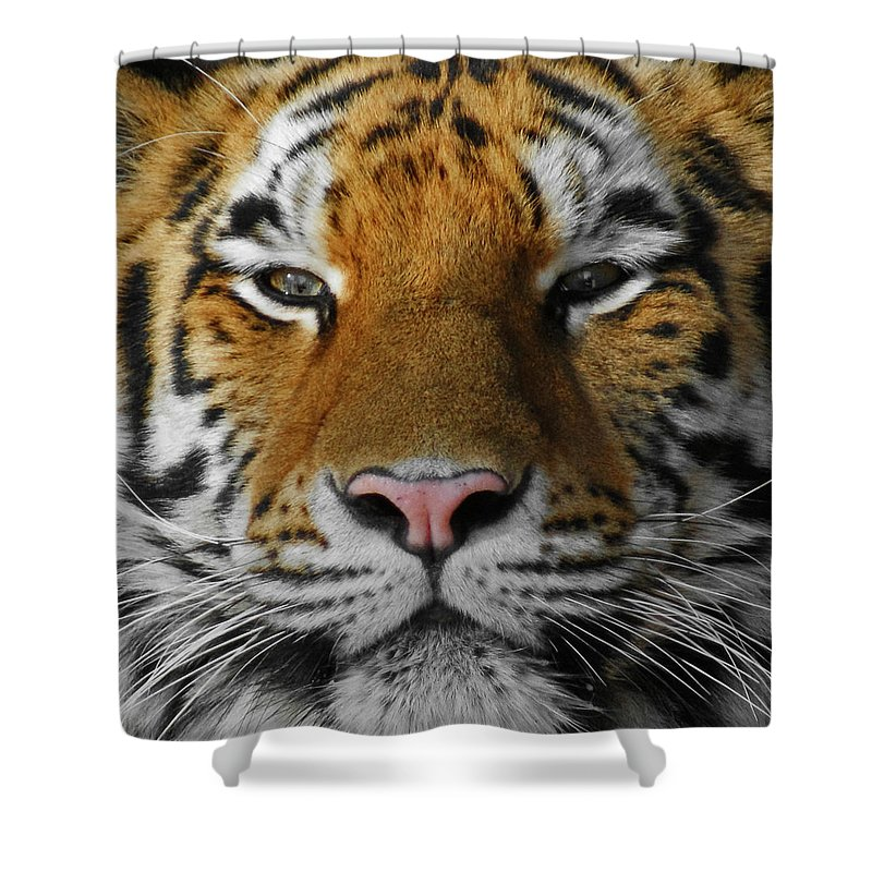 Tiger Shower Curtain featuring the photograph Tiger 1 by Ernie Echols