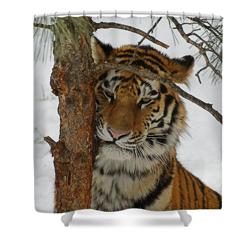 Tiger Shower Curtain featuring the photograph Tiger 2 by Ernie Echols