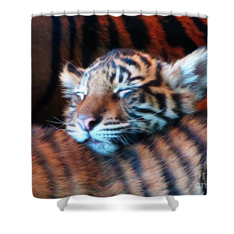 Ron Tackett Photography Shower Curtain featuring the photograph Tiger Cub Nap by Ron Tackett
