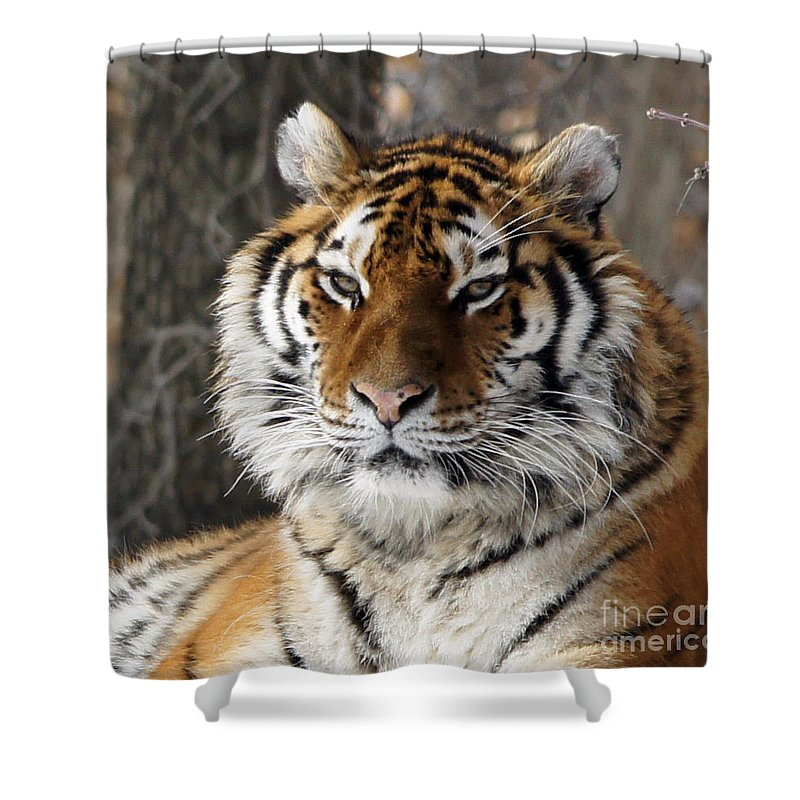 Tinas Captured Moments Shower Curtain featuring the photograph Tiger Head by Tina Hailey