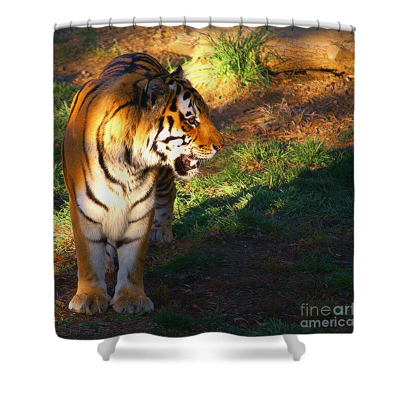 Tiger Shower Curtain featuring the photograph Tiger by Robert Edgar