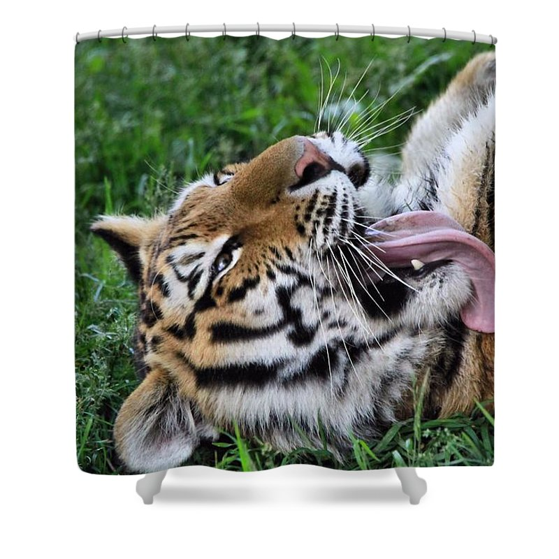 Tiger Tongue Shower Curtain featuring the photograph Tiger Tongue by Dan Sproul