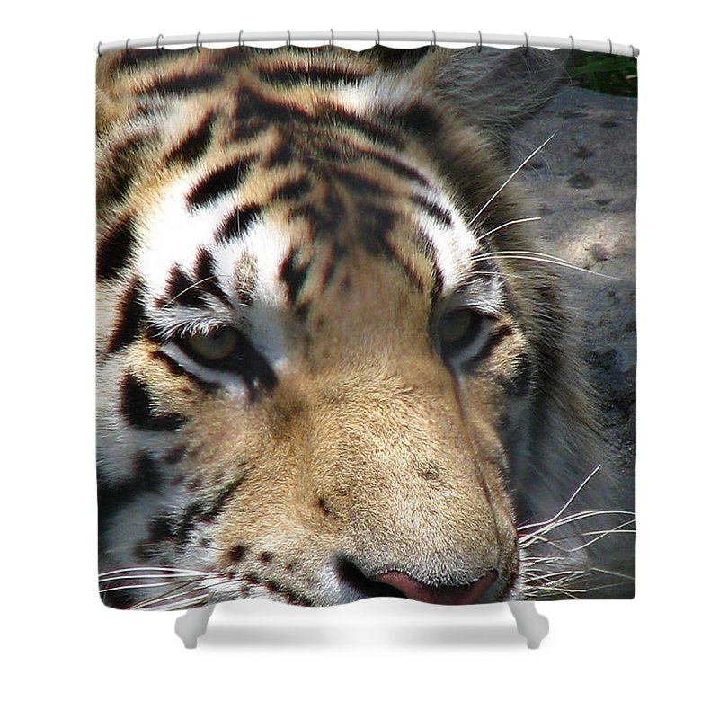 Patzer Shower Curtain featuring the photograph Tiger Water by Greg Patzer