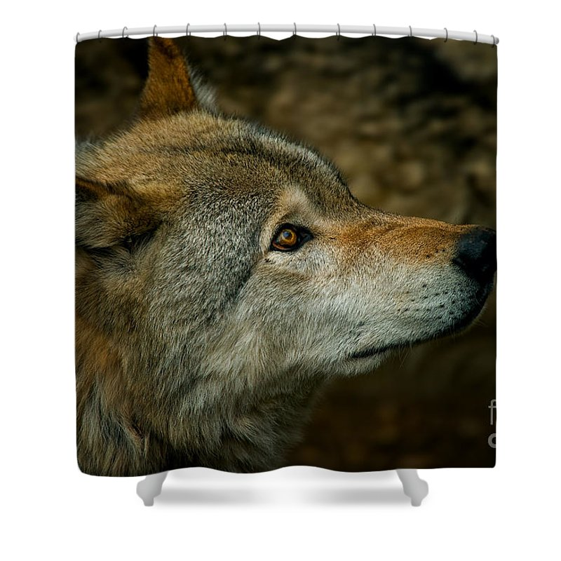 Timber Wolf Shower Curtain featuring the photograph Timber Wolf Pictures 268 by Wolves Only