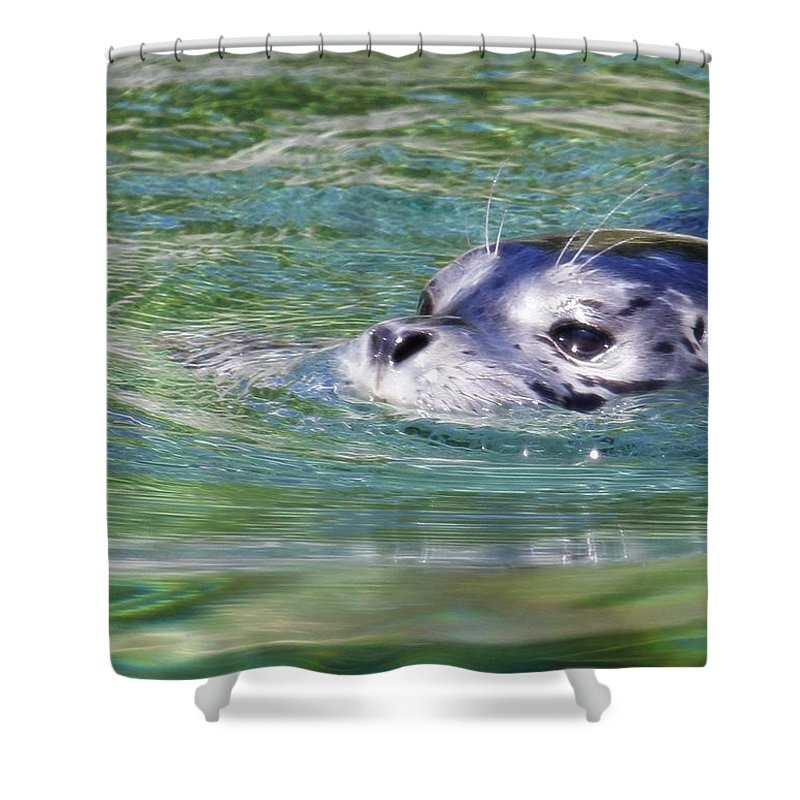 Baby Seal Shower Curtain featuring the photograph Time For A Swim by Steve McKinzie