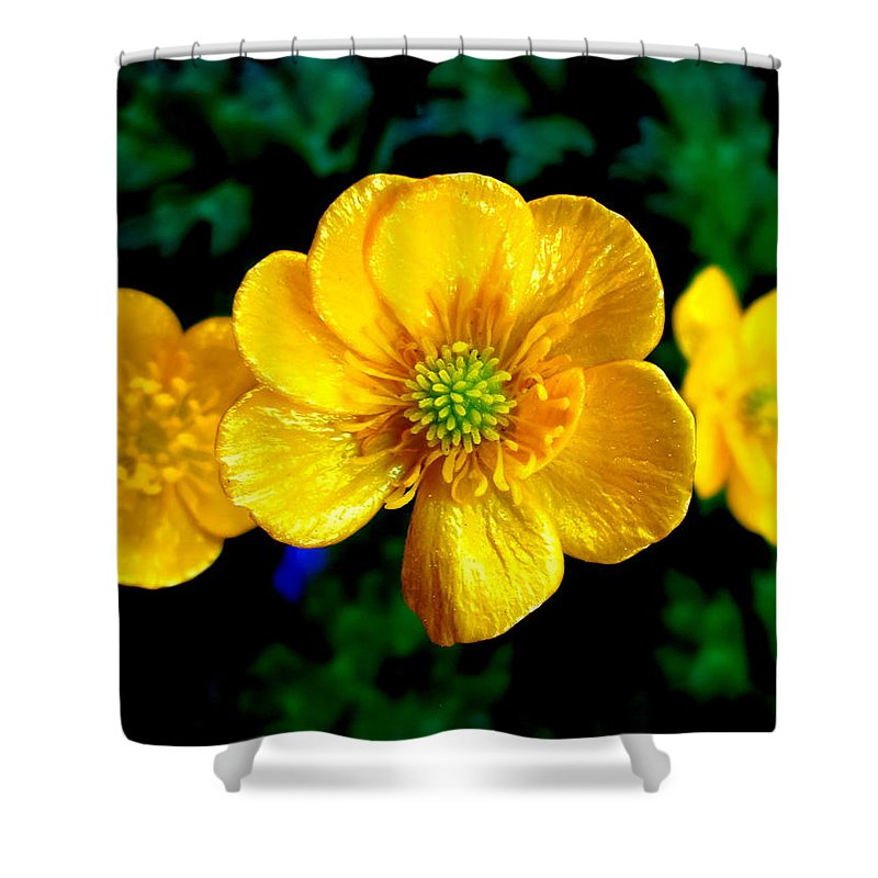 Yellow Buttercup Shower Curtain featuring the photograph Timeless Buttercup by Patty Boban Lipinski