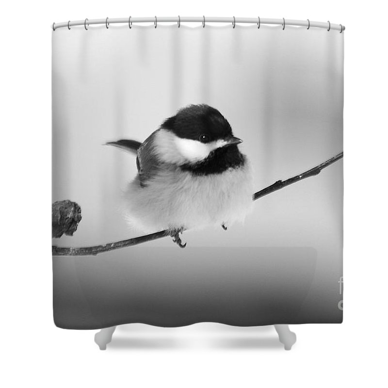 Bird Shower Curtain featuring the photograph Tiny Branch With Guest by Deborah Benoit