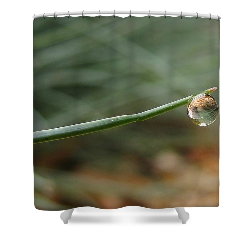Nature Shower Curtain featuring the photograph Tiny Morning Dew by Matt Taylor