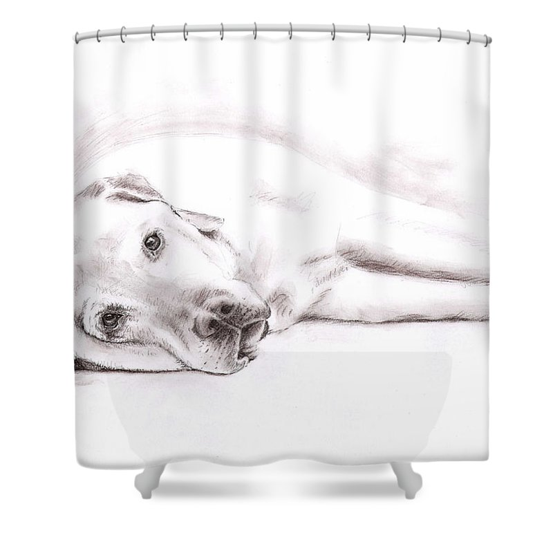 Dog Shower Curtain featuring the drawing Tired Labrador by Nicole Zeug