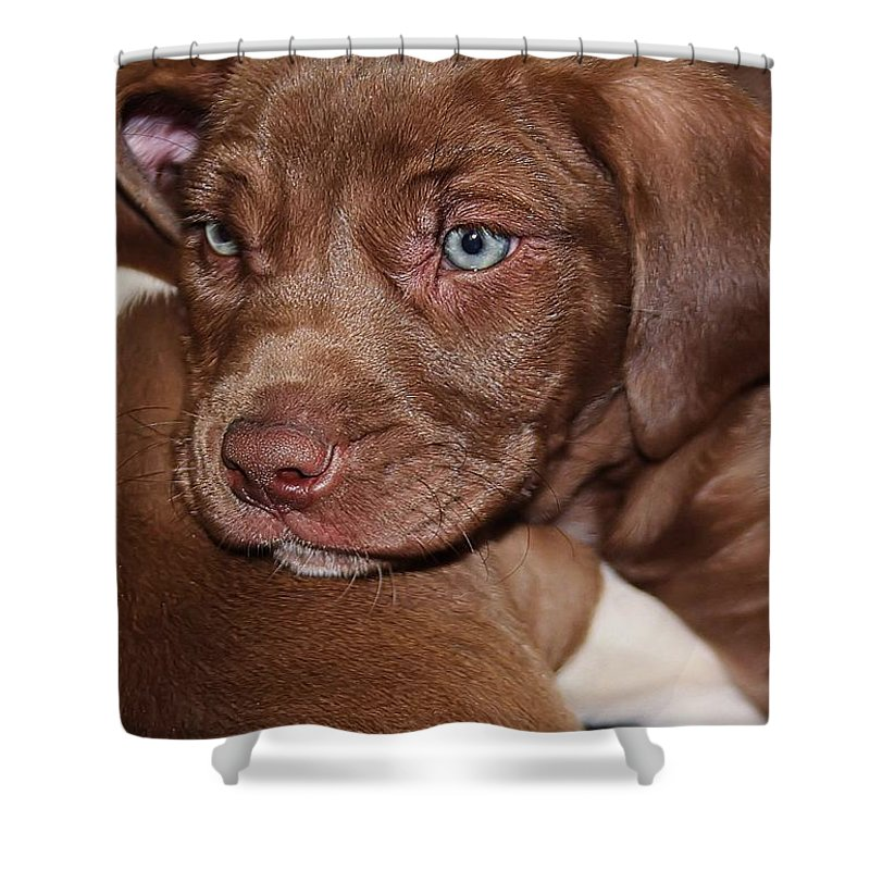 Pit Bull Shower Curtain featuring the photograph Tired Out by Joyce Baldassarre
