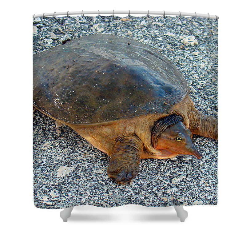 Turtle Shower Curtain featuring the photograph Tired Turtle by Nancy L Marshall
