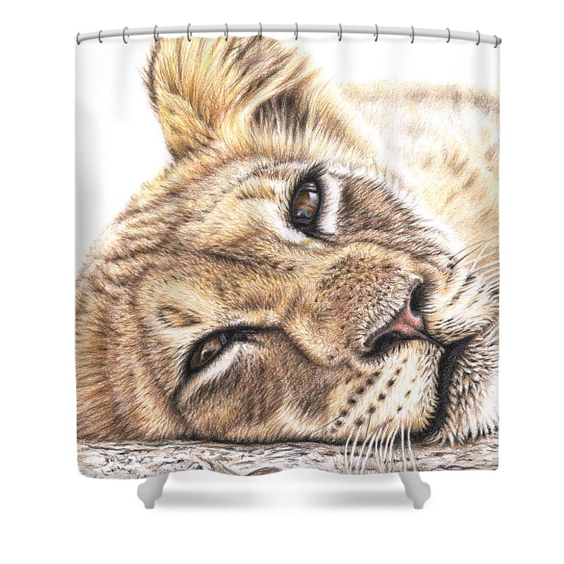 Lion Shower Curtain featuring the drawing Tired Young Lion by Nicole Zeug
