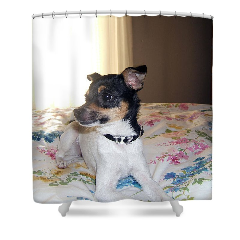 Dog Shower Curtain featuring the photograph 'tis Herself by Barbara McDevitt