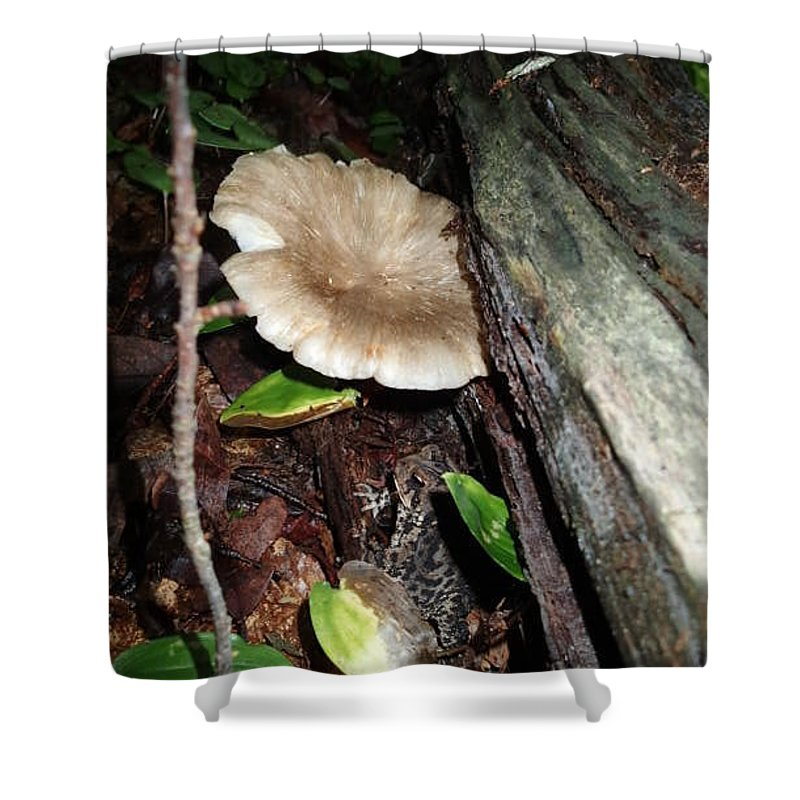 Toad Shower Curtain featuring the photograph Toad 3 by Robert Nickologianis