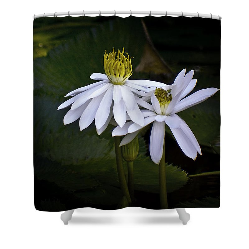 Floral Shower Curtain featuring the photograph Togetherness by Holly Kempe