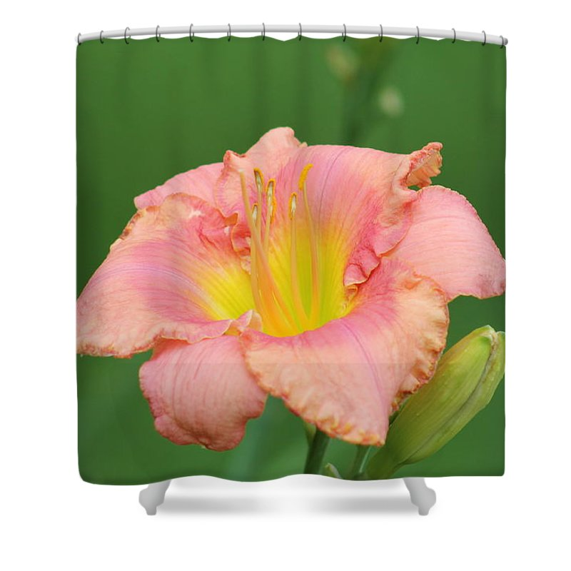 Daylilies Shower Curtain featuring the photograph toni lynn morrison daylily- A by G Berry