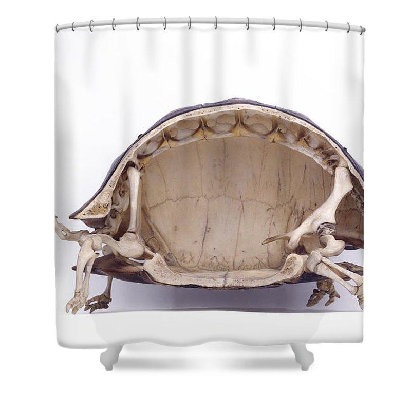 Tortoise Skeleton, Cross-section Shower Curtain