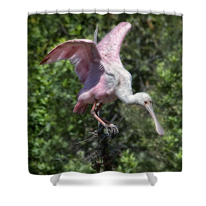 Shower Curtain featuring the photograph Touch Down by Claudia Kuhn