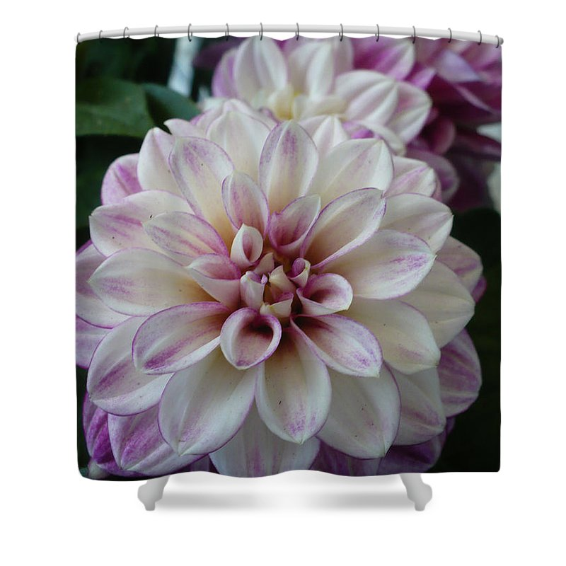 Dahlia Shower Curtain featuring the photograph Touch Of Pink Dahlia by Nicki Bennett