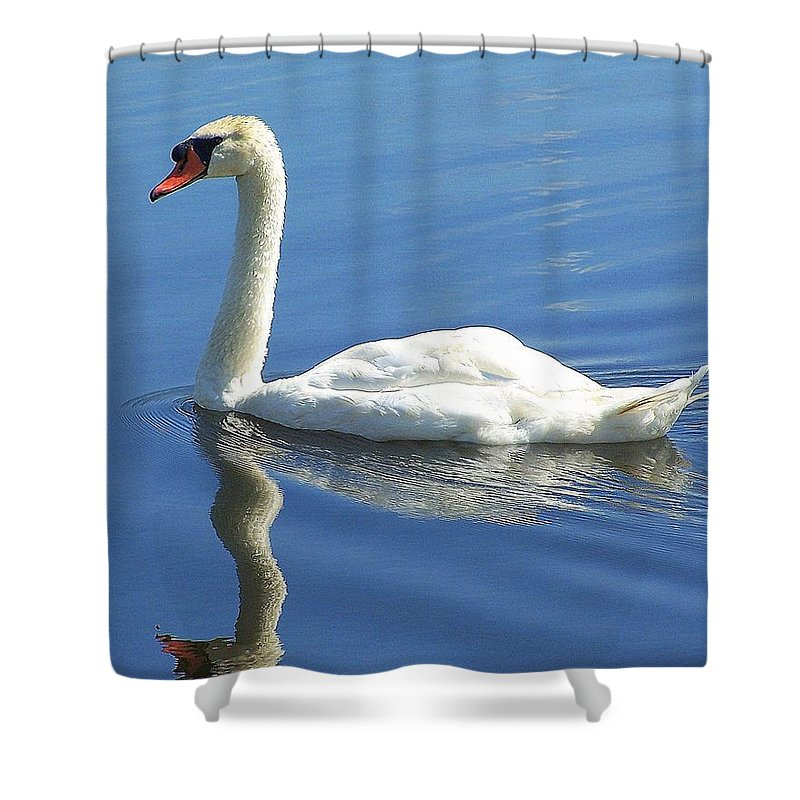 Swan Shower Curtain featuring the photograph Tranquility by Frozen in Time Fine Art Photography