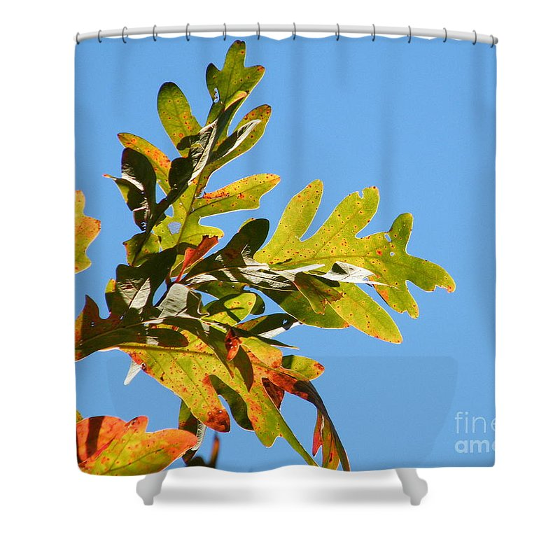 Leaves Shower Curtain featuring the photograph Transitions by Cheryl Hardt Art