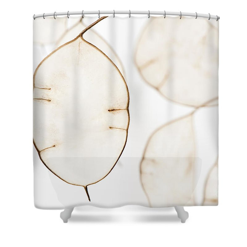 Annua Shower Curtain featuring the photograph Translucent by Anne Gilbert