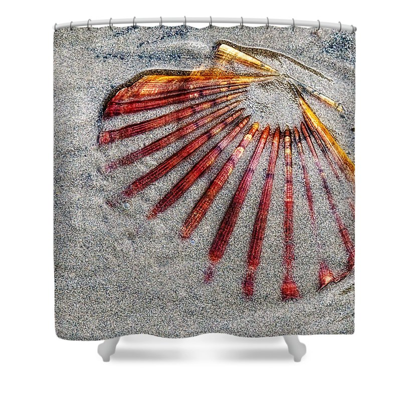 Shell Shower Curtain featuring the photograph Trapped By The Tide by Susie Peek
