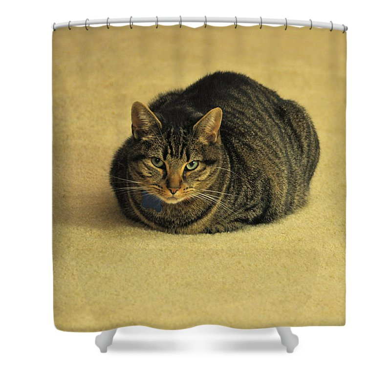 Animals Shower Curtain featuring the photograph Trav by Jan Amiss Photography