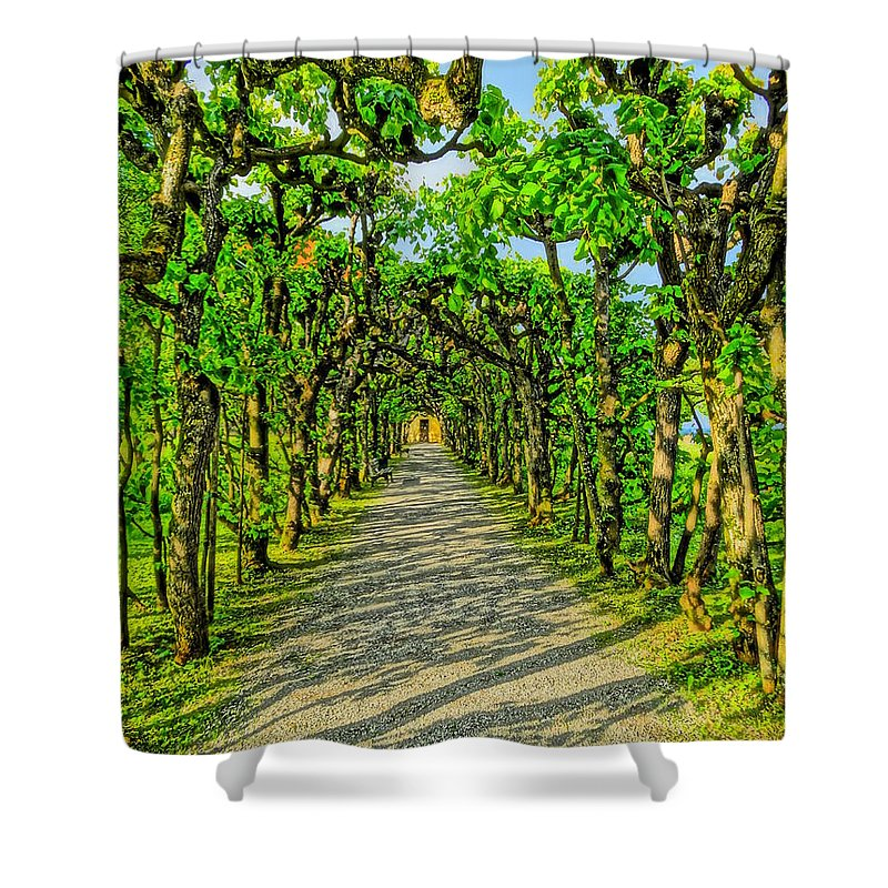Forest Shower Curtain featuring the photograph Tree Alley In Castle Park by M Bleichner