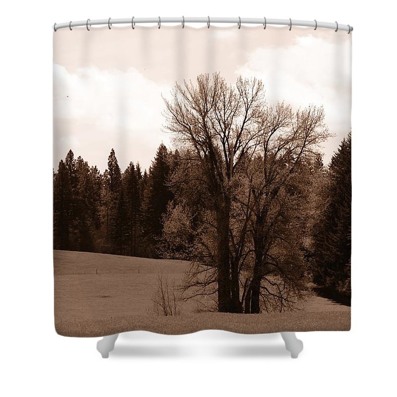 Oregon Shower Curtain featuring the photograph Tree by Image Takers Photography LLC