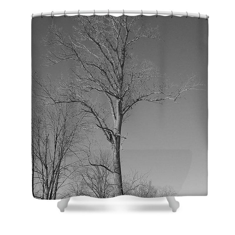 Tree Shower Curtain featuring the photograph Tree In Winter by Michelle Miron-Rebbe