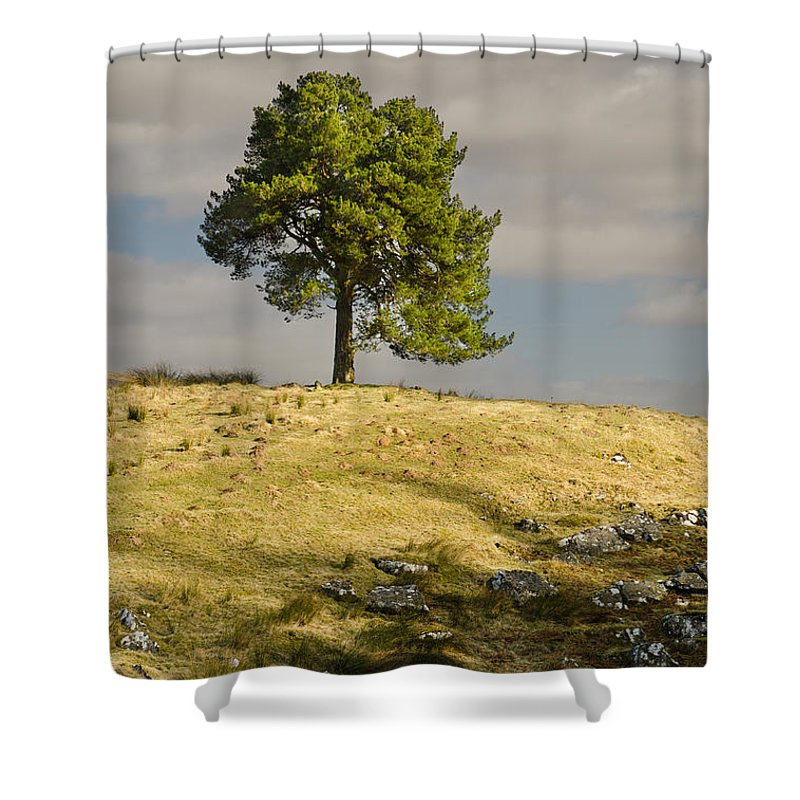 Countryside Shower Curtain featuring the photograph Tree On A Hill Vertical by David Head