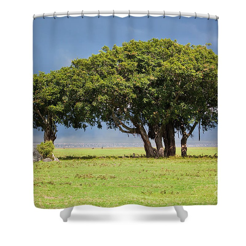 Africa Shower Curtain featuring the photograph Tree On Savannah. Ngorongoro In Tanzania by Michal Bednarek