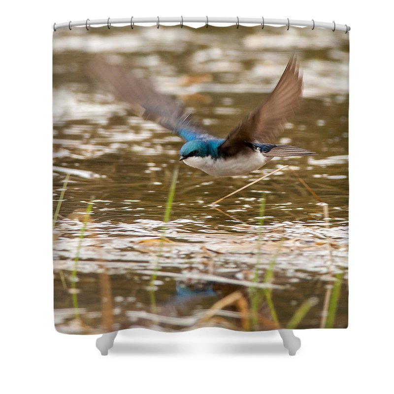 Bird Shower Curtain featuring the photograph Tree Swallow In Flight by Richard Kitchen