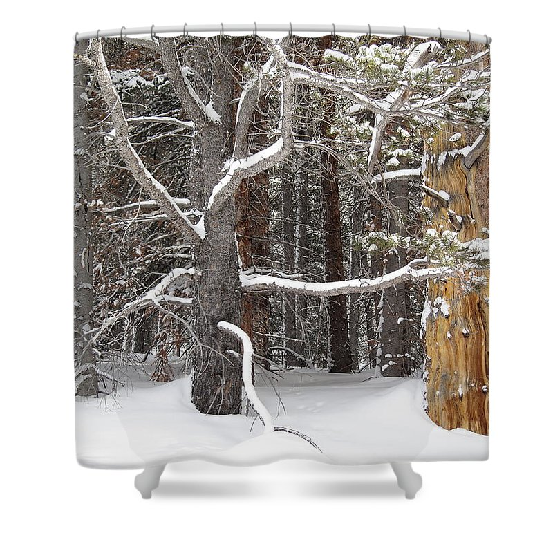 Landscape Shower Curtain featuring the photograph Tree Talk by Eric Glaser