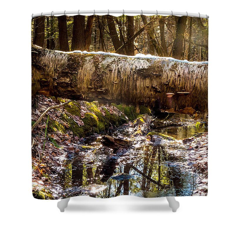 New England Shower Curtain featuring the photograph Tree Walk by DAC Photo