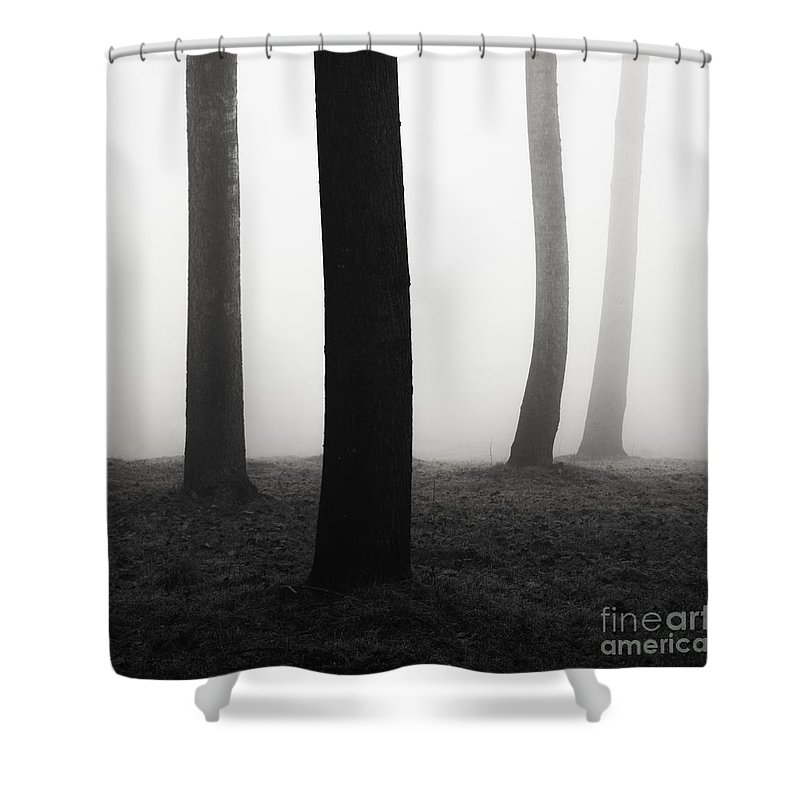 Italy Shower Curtain featuring the photograph Trees Dancing In The Fog by Matteo Colombo