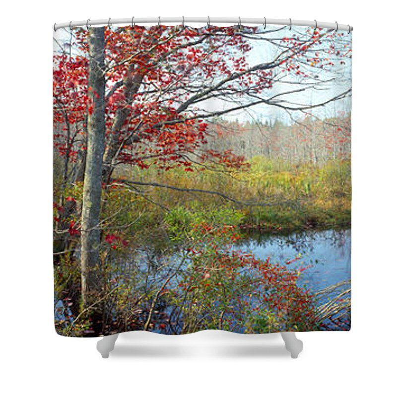 Photography Shower Curtain featuring the photograph Trees In A Forest, Damariscotta by Panoramic Images
