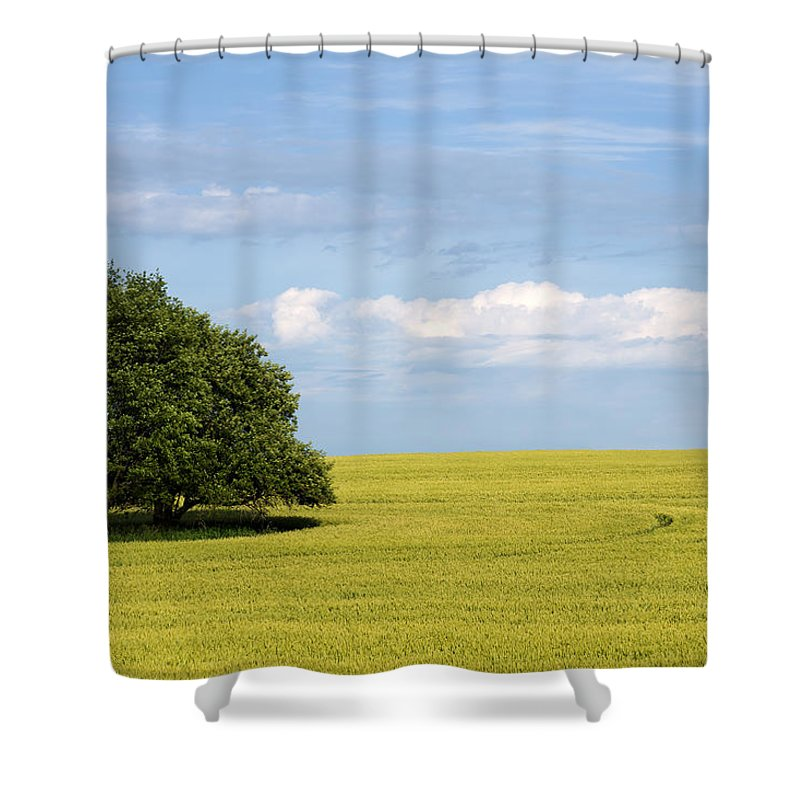 Grass Family Shower Curtain featuring the photograph Trees In Wheat Field by Simplycreativephotography