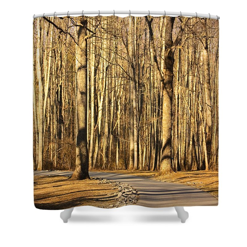 Trees Shower Curtain featuring the photograph Trees Shadows by Tammy Schneider