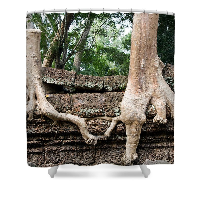 Help Shower Curtain featuring the photograph Trees United by Artur Bogacki