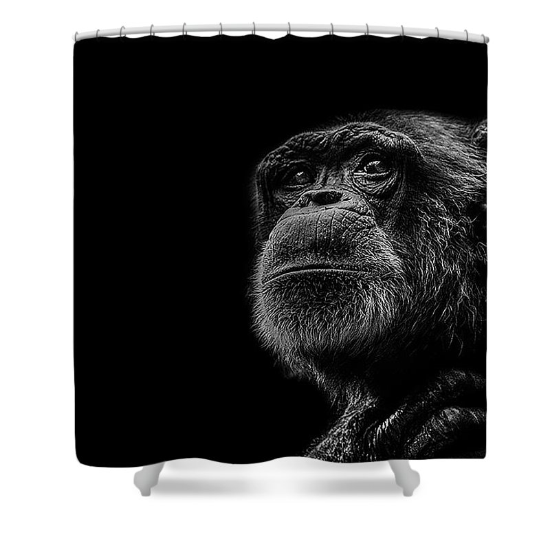 Chimpanzee Shower Curtains
