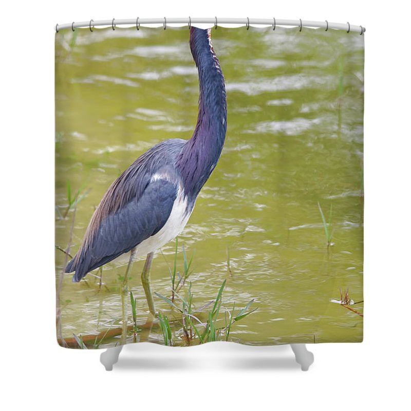 Tri Colored Shower Curtain featuring the photograph Tri Colored In Lake by Deborah Benoit