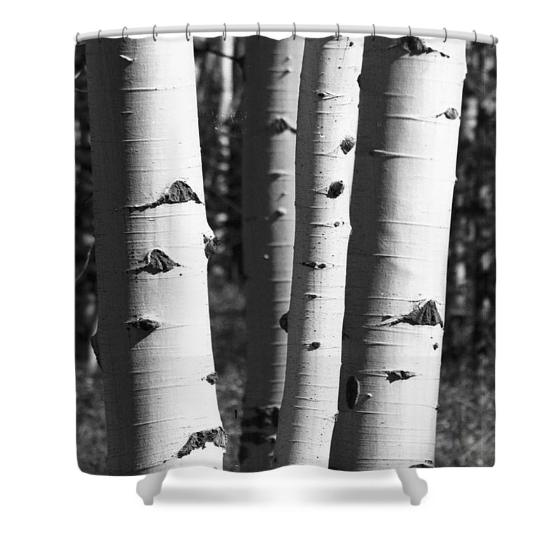 Aspens Shower Curtain featuring the photograph Triple Aspens by Brandi Maher