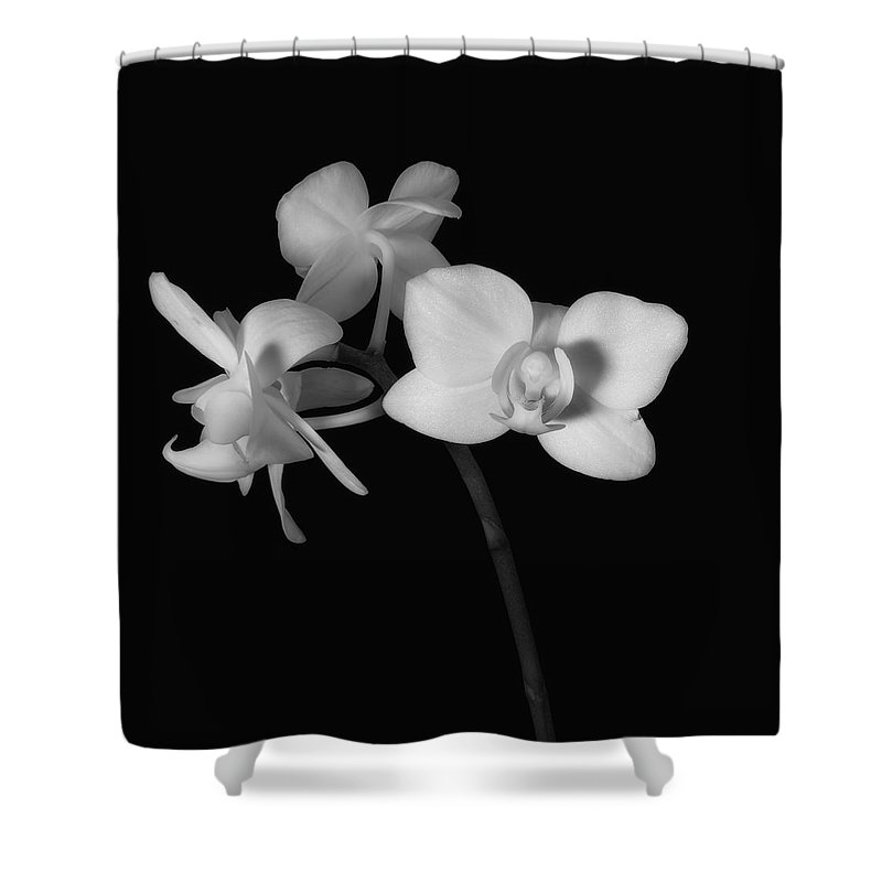 Moth Orchid Shower Curtain featuring the photograph Triplets by Ron White