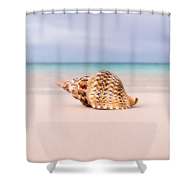 Antigua And Barbuda Shower Curtain featuring the photograph Triton Seashell by Ferry Zievinger