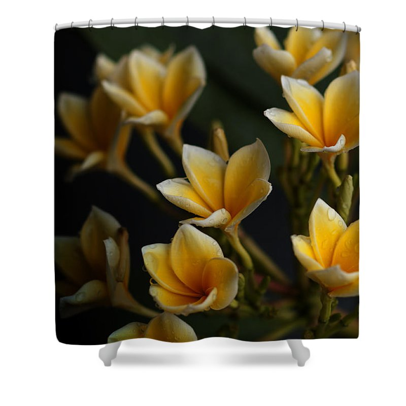 Flowers Shower Curtain featuring the photograph Tropic Welcome by Miguel Winterpacht