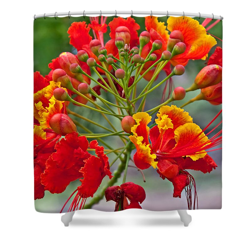 Flower Shower Curtain featuring the photograph Tropical Flower Caesalpinia Red And Yellow by Valerie Garner
