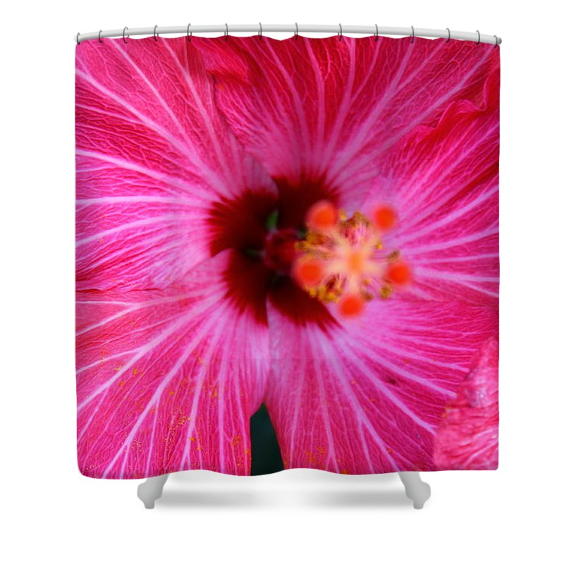 Pink Shower Curtain featuring the photograph Tropical Flower Time by Catie Canetti