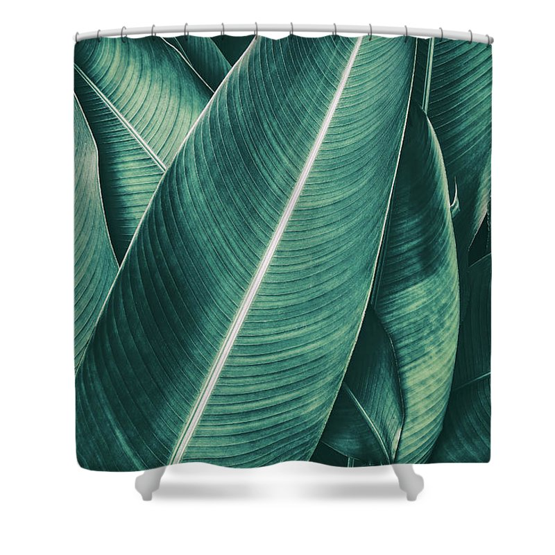 Spa Shower Curtain featuring the photograph Tropical Palm Leaf, Dark Green Toned by Pernsanitfoto